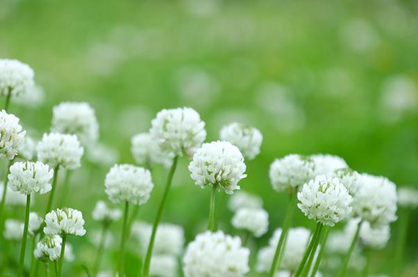 平成25年度 大阪市設瓜破霊園内合葬式墓地の使用者を募集します